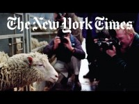 The Uproar That Accompanied Dolly the Sheep